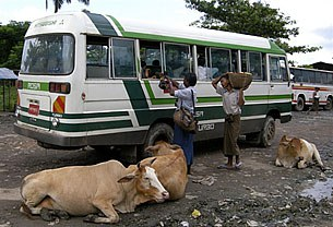 bus_hawkers_305px.jpg