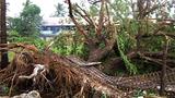 cyclone_giri_trees_kyaukphyu_305_z.png