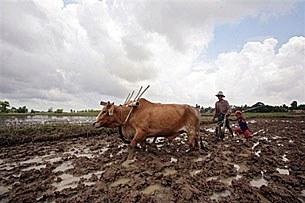 farmer-plough-305
