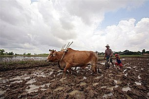 farmer_plough_ox_305px.jpg