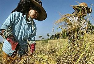 farmer_woman_work_305_z.jpg