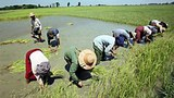 farmers_planting_rice_305px.jpg