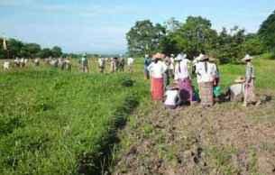 padung-farmers-b305