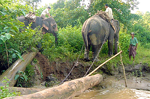 timber-elephant-305.png