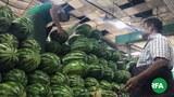 watermelon-622.jpg