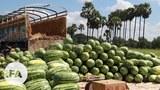 watermelon1-622.jpg