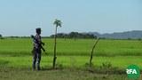 border-guard-police-rathedaung-622