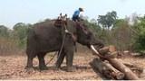 elephant-622.jpg
