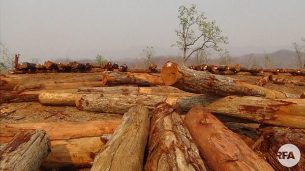 logging-622.jpg