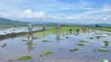 farmers-620.jpg