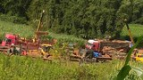 illegal-logging-622.JPG