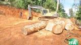 illgeal-logging-620.jpg