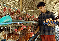 poultry_farm_200px.jpg