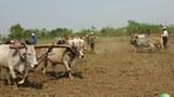sintkuu-farmers-620.jpg