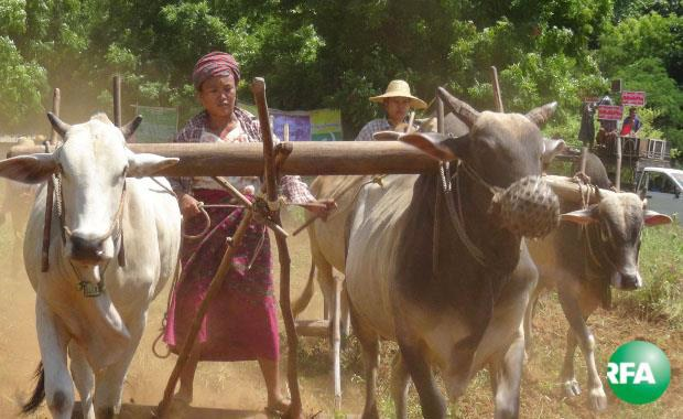 patheingyi-farmers-620.jpg