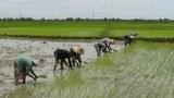farmers-cultivate-305.jpg