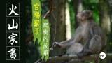 【火山家书】 官场猴子爬树的故事