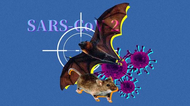 锺南山研究指新冠病毒中间宿主疑是啮齿动物 学者批图卸实验室泄漏责任
