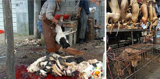 Yulin-Dogmeat-Festival620.jpg