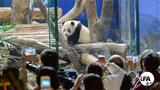 大陆拒台参加大猫熊年会 台湾「圆仔」沦政治熊猫