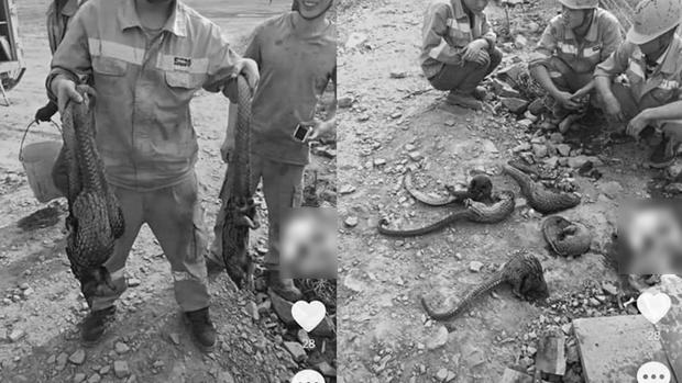 參與非洲開發中資集團 員工經常虐殺野生動物引發眾怒