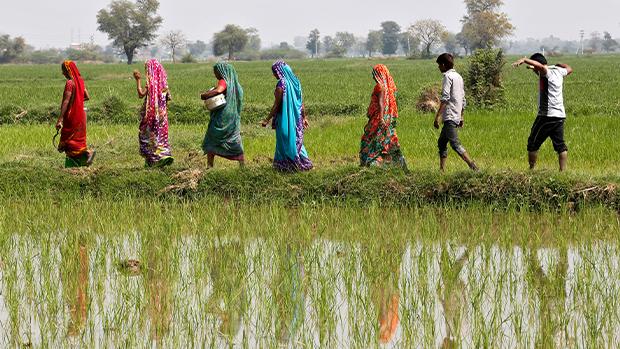 中國大米出現緊缺 30年來首次從印度進口
