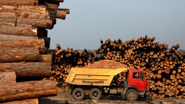 中國於俄羅斯大舉伐木   民眾不滿釀成莫斯科政治風波