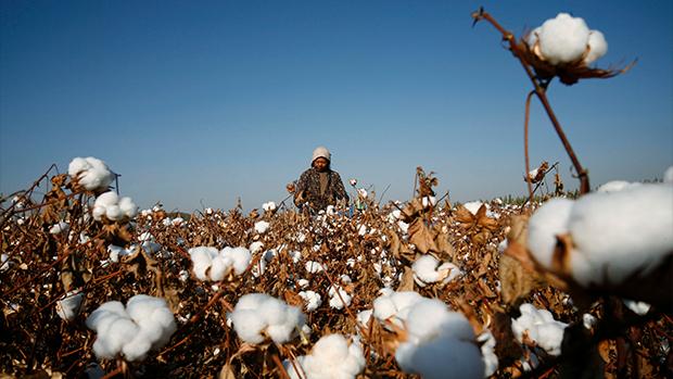 纽约时报:美国或禁止入口新疆棉制品