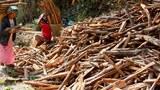 myanmar-chin-firewood.JPG