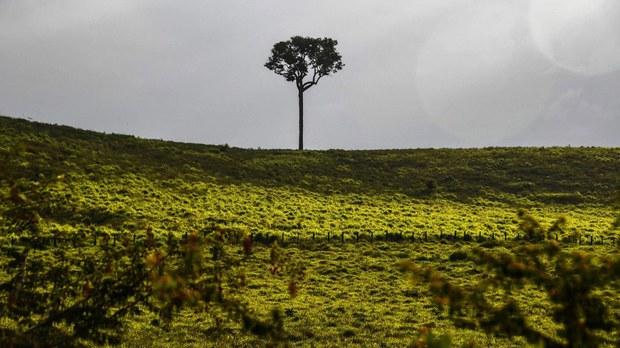 amazon-brazil.jpg