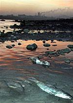Songhua150.jpg