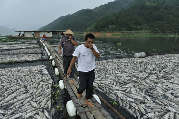 china-dead-fish-sept-2011.jpg