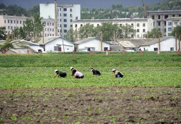 korea-north-farms-07082015.jpg