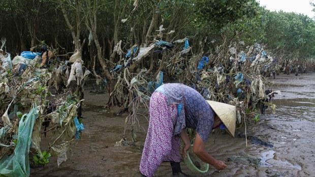 vietnam-mangrove.jpg