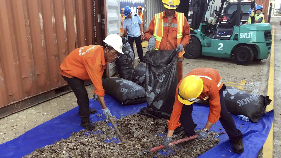 Officials sorting seized pangolin scales at a port in southern Vietnam's Ba Ria Vung Tau province, May 23, 2019.