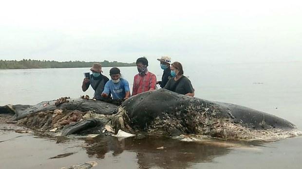 whale-plastic.jpg