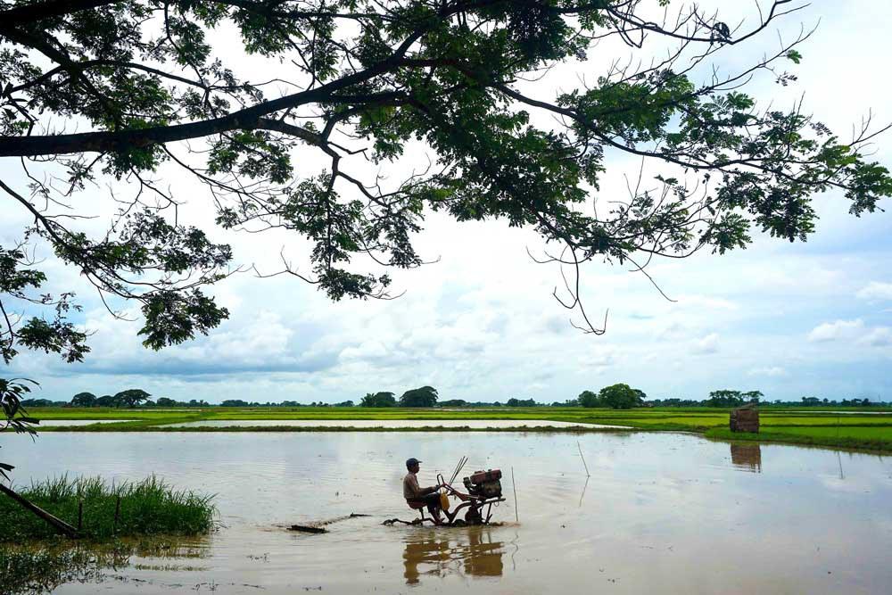 Photo gallery: Monsoon season is rice season