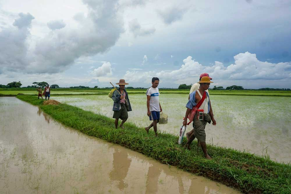Workers return from the paddies after a hard day's work. Myo Min Soe/RFA