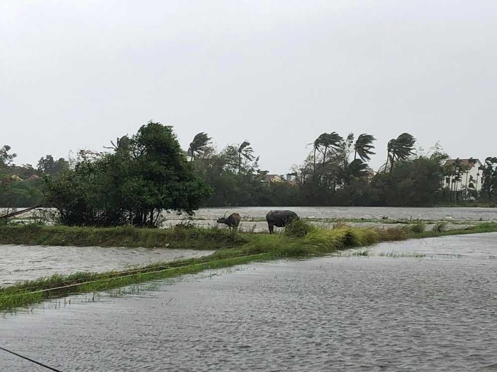 Day2_Vietnam_Typhoon_003.jpg