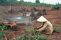 VietnamDrought200.jpg