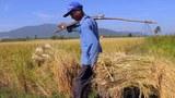 cambodia-rice-farmer-nov-2010.jpg