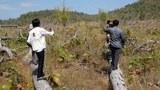 khmer-logging-oct92015.jpg