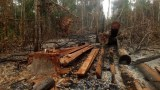 Green Group Records 100 Cases of Illegal Logging in Protected Cambodian Forest in Three Days