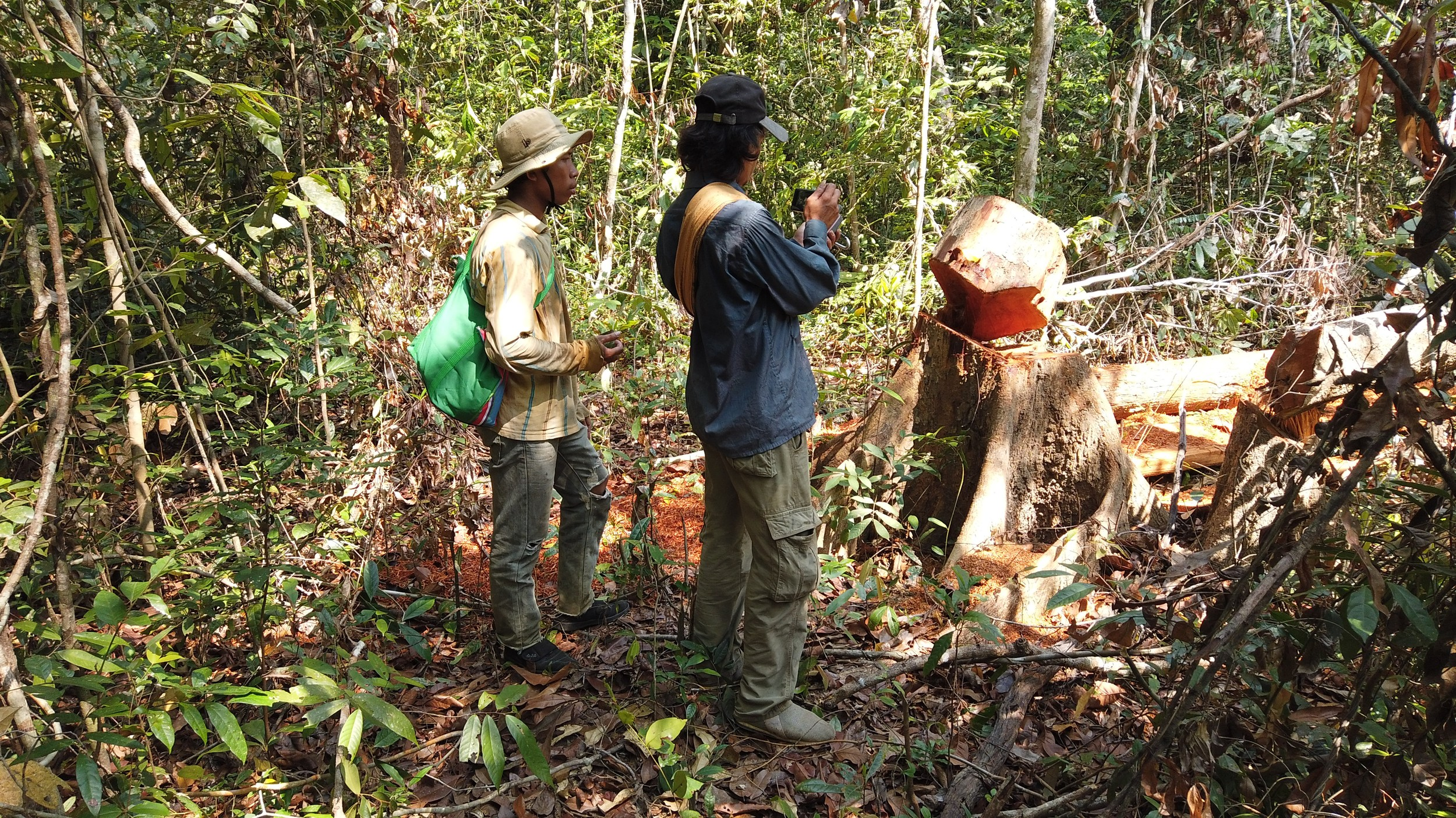 Authorities Threaten to Arrest Activists Monitoring Illegal Logging in Cambodia's Prey Lang Forest