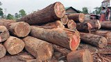 cambodia-luxury-wood-kampong-thom-province-march-2012.jpg
