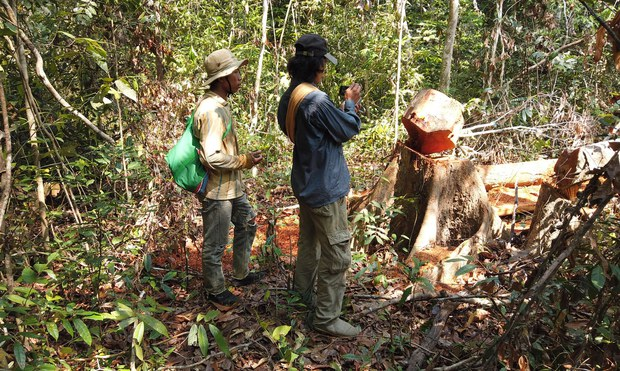Environmental activists document illegal logging in Cambodia's Prey Lang  forest, April 22, 2020.