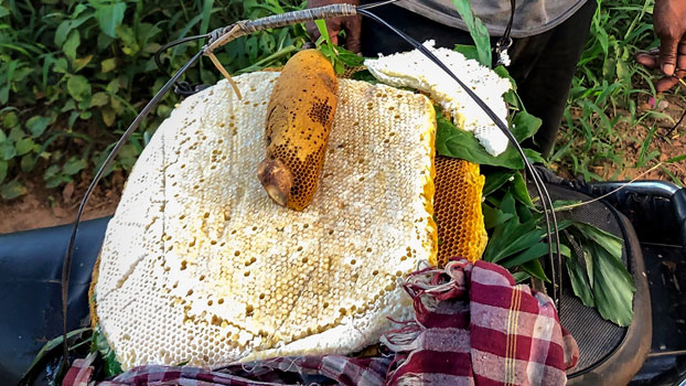 A honeycomb and beehive are displayed on a motorbike seat in southwestern Cambodia's Koh Kong province, August 2020.
