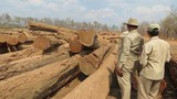 cambodia-illegal-logging-kratie-province-jan18-2015.JPG