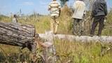 Hun Sen's Forest Protection Plan Falls Flat