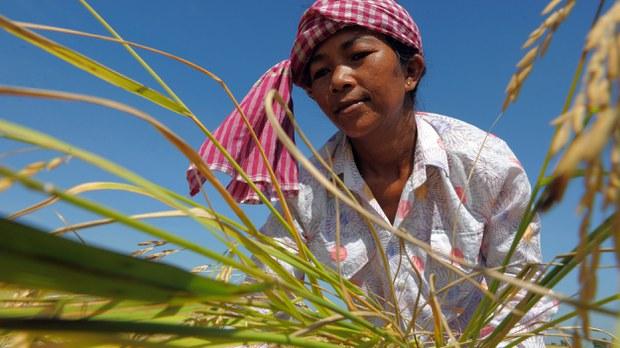 cambodia-rice-farmer-2010.jpg